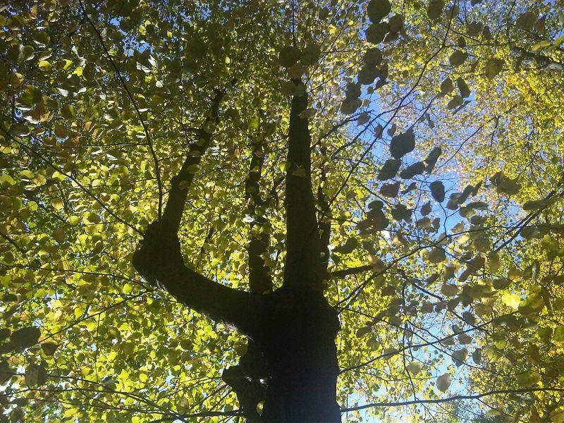 Johns tree